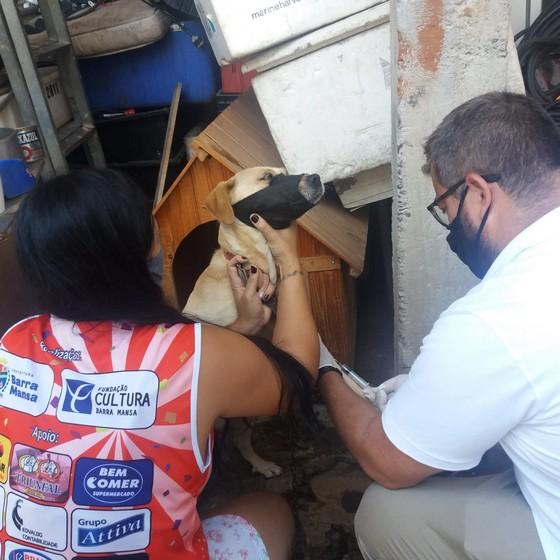 Prefeitura de Barra Mansa intensifica ações de combate à Leishmaniose Visceral Canina